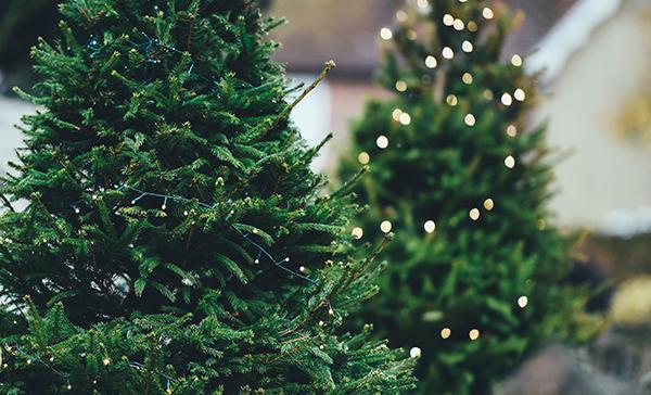 ¿Es mejor poner un árbol de navidad artificial o uno natural?